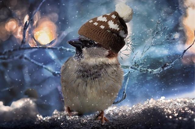 Medicare when you are a snow bird